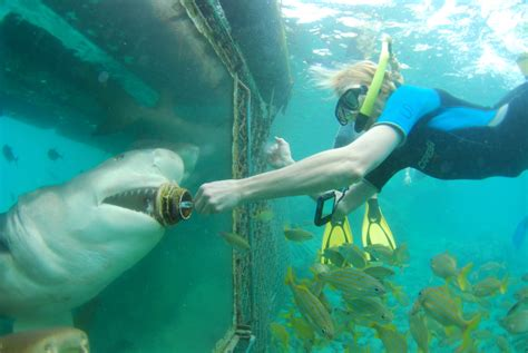"""Kit: """"Up Close with a Shark? You Bet!"""" - Curaçao Chronicle"""