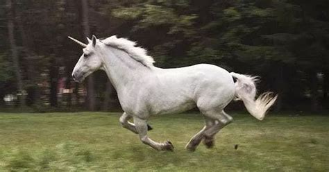 Real Unicorns Did Exist But Looked Absolutely Terrifying