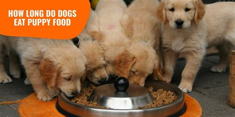 How Long Do Dogs Eat Puppy Food? — Age, Transition & Methods